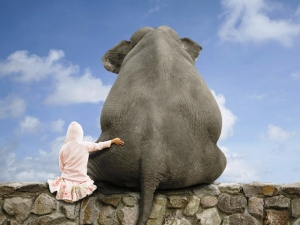 http://www.fbpapa.com/wp-content/uploads/2014/08/elephant_850916.jpg